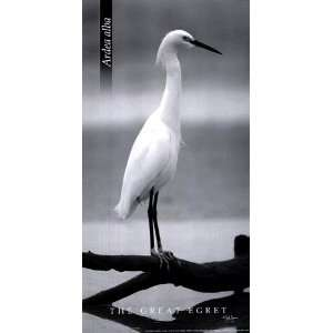 The Great Egret Finest LAMINATED Print John Jones 6x12